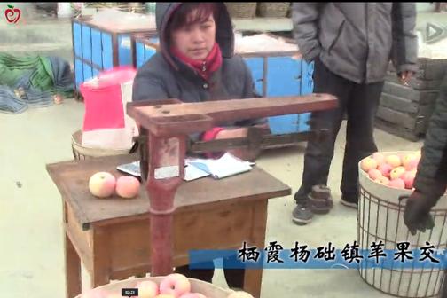 苹果丰产不丰收,果贱伤农声再起---栖霞杨础镇苹果交易实录 ()