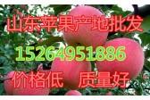 山东顺季果蔬购销中心  ()