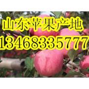 山东万亩苹果批发基地 ()