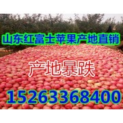 山东浮来山苹果生产基地 ()