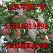 莒县小董农副产品购销处 ()