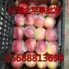 红富士苹果万亩果园现货采摘