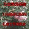 红富士苹果果园直销 纸袋膜袋任选