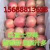 15688813698常年供应山东红富士苹果