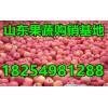 18254981288红富士/纸袋/膜袋/纸夹膜苹果产地