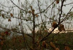 甘肃、陕西部分产区受冰雹灾害影响严重 ()