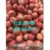 山东优质红富士苹果产地批发