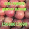 山东红富士苹果产地直销1.4-2.2
