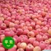 13573938098山东条纹水晶红富士苹果产地大量批发