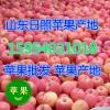 15954021018山东冷库红富士苹果产地批发价格
