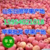 15954021018诚信供应优质冷库水晶红富士苹果