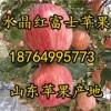 18764995773山东嘎啦冰糖心苹果大量上市