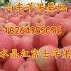 山东中秋礼品苹果大量上市