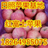 18264955075山东红将军苹果大量上市