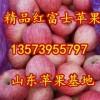 13573955797山东红富士苹果大量上市