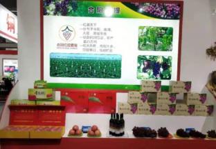 合阳水果亮相中国·陕西(洛川)国际苹果博览会 ()