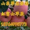 18764995773山东纸袋红富士苹果大量上市