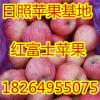 18264955075山东全红红富士苹果大量批发