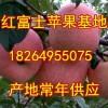 大量出售山东冷库条纹片红红富士苹果