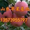 供应山东万吨条纹红富士苹果
