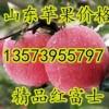 13573955797山东冷库条纹苹果大量批发
