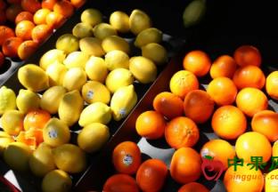 中国批准智利柑橘进入国内市场 ()