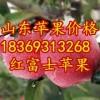 18369313268山东冷库红富士苹果价格大跌