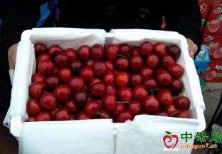 进口水果畅销 国产水果打出品质牌 ()
