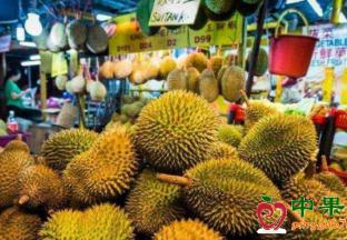 疫情恐致泰国水果出口价格…