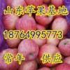 18764995773山东万亩红富士苹果大量批发