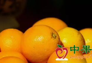 南非:2020疫情或对柑橘出…