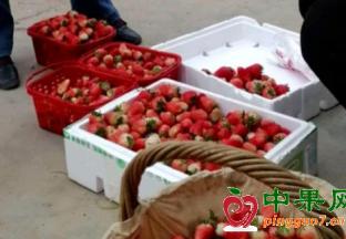 安徽阜阳:时令水果竞相上…