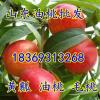 18369313268山东大棚西瓜油桃大量上市