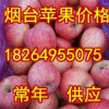 18264955075山东冷库红富士苹果大量有货