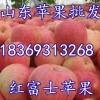 18369313268山东冷库红富士苹果大量出库