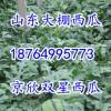 18764995773山东万亩甜王京欣西瓜大量上市