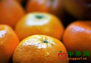 摩洛哥柑橘本季出口量下滑 ()