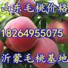 山东沂蒙山万亩水蜜桃大量上市