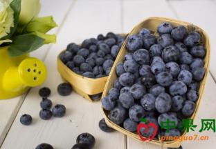 南非:蓝莓产业发展迅速 ()