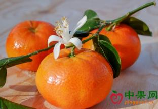 新季中国柑橘预计增产100万…